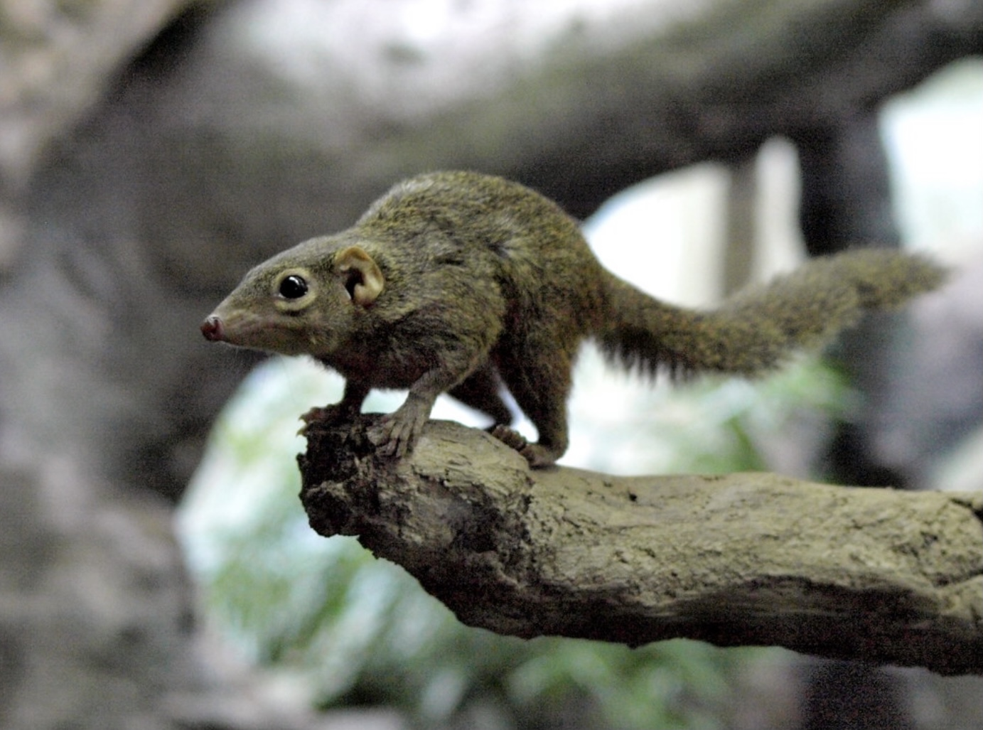 Those damn squirrels!-f3ff4dec-9858-4599-a984-9ad6c79e006a-jpeg