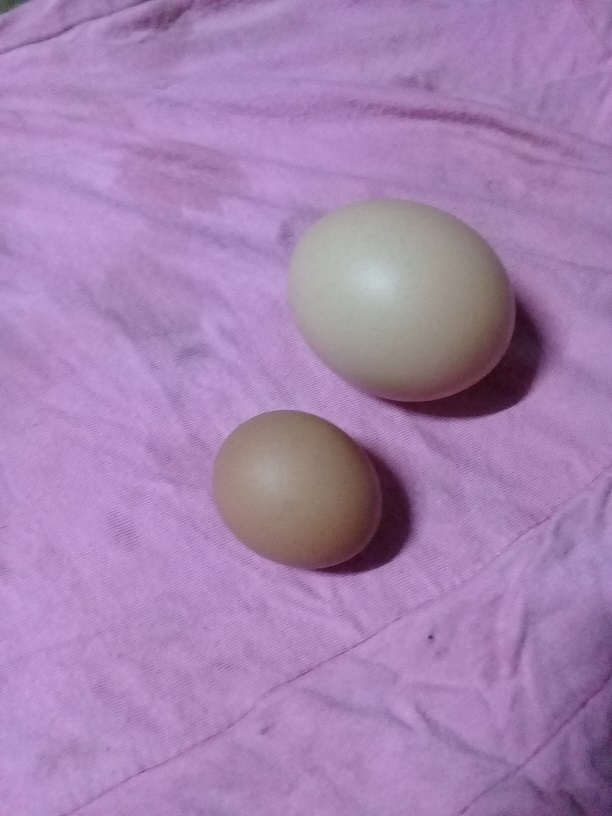 My Splendid Cock-20210413_191124-jpg