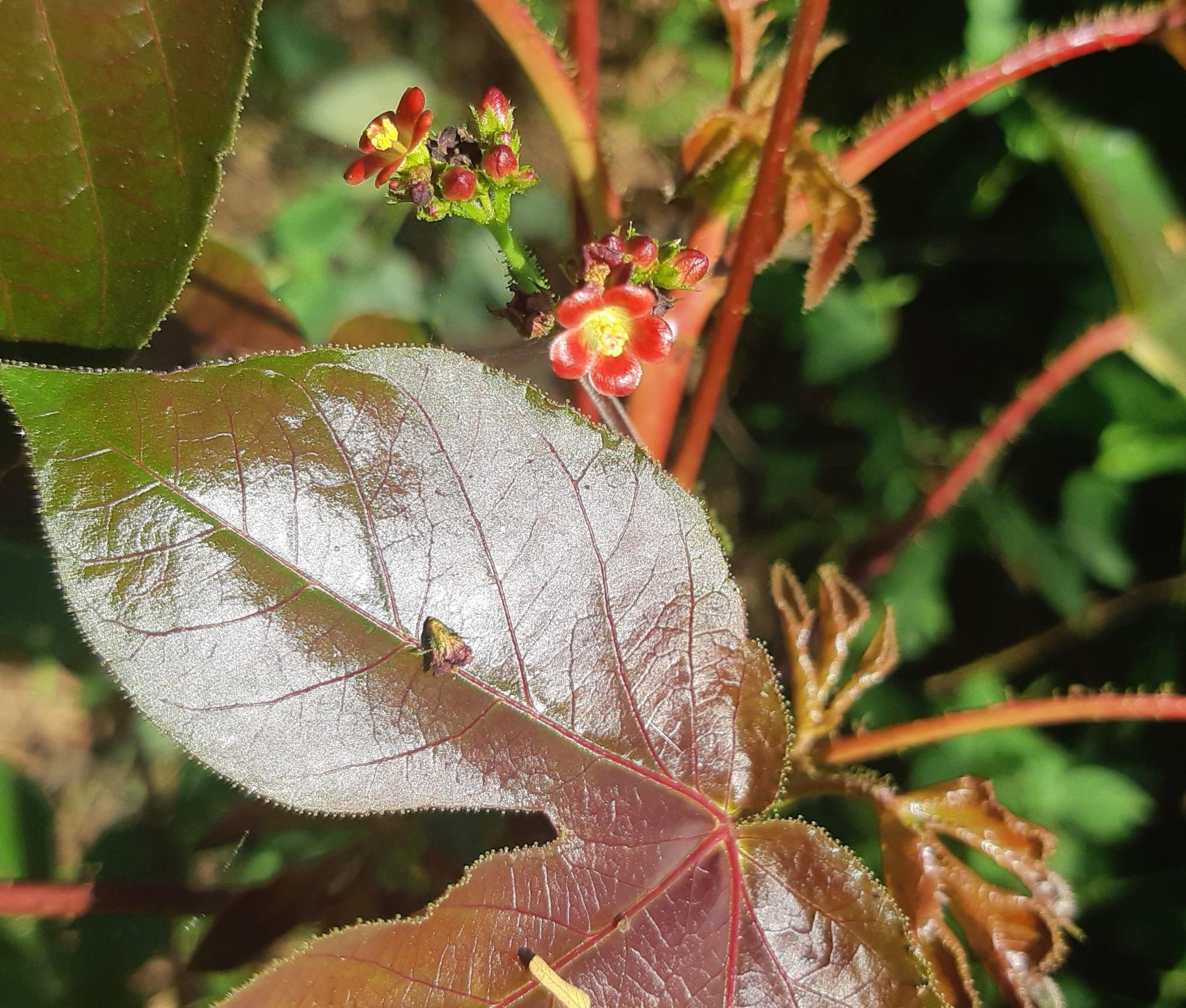 What's in your garden?-red-flower-jpg
