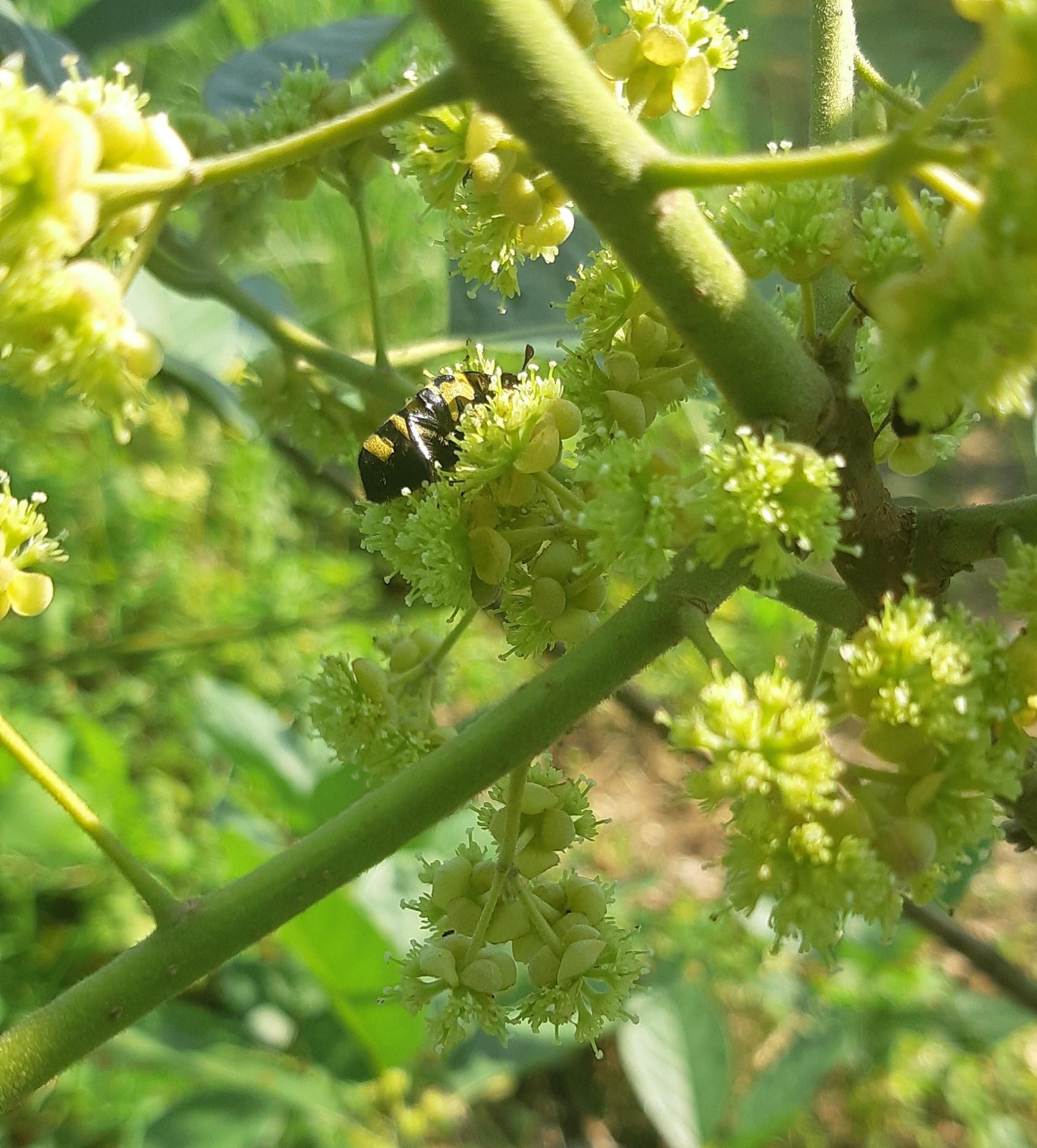 What's in your garden?-bee-tree-jpg
