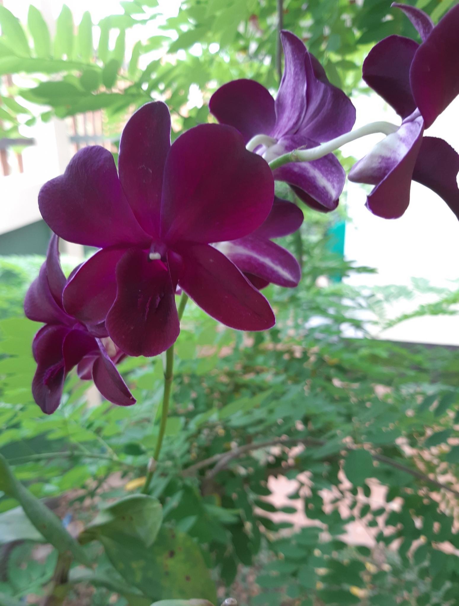 What's in your garden?-purple-orchid-jpg