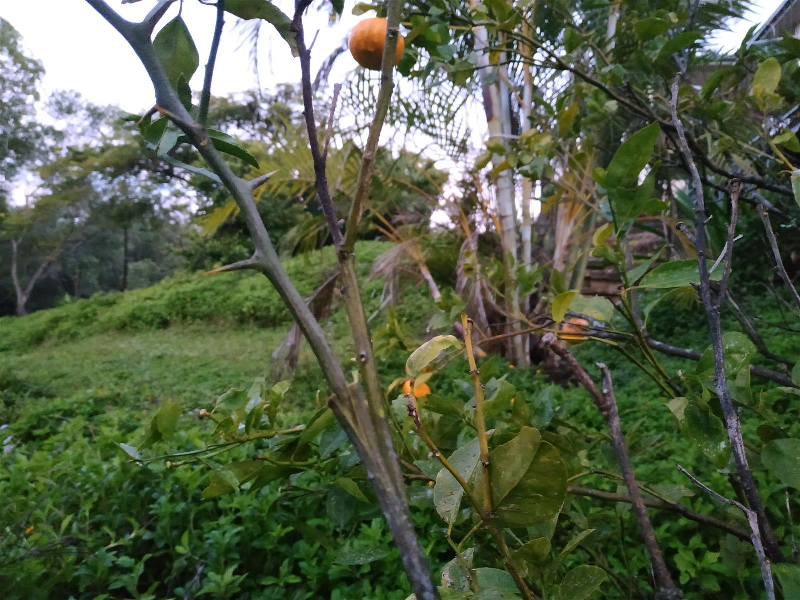 What's in your garden?-img_20210709_191611-jpg