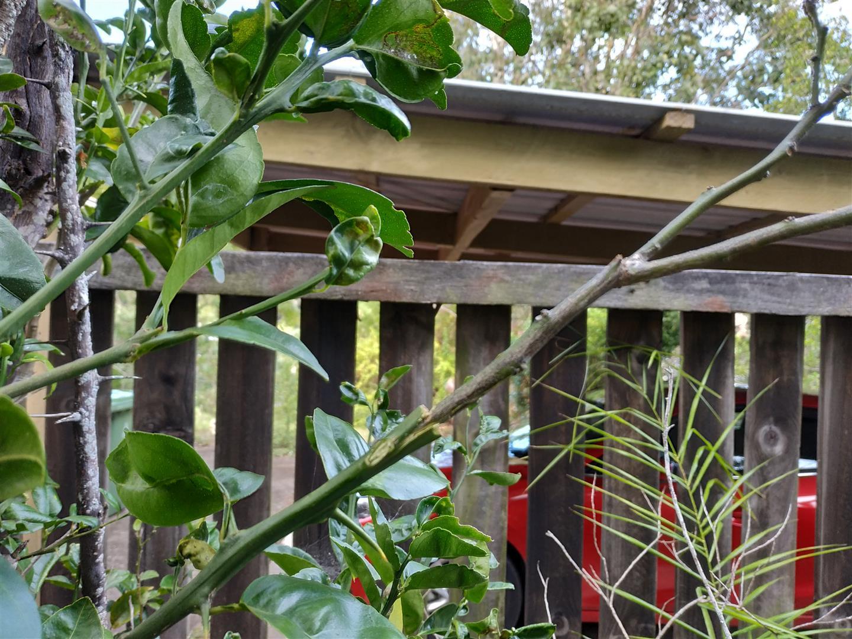 What's in your garden?-img_20210714_180613-jpg
