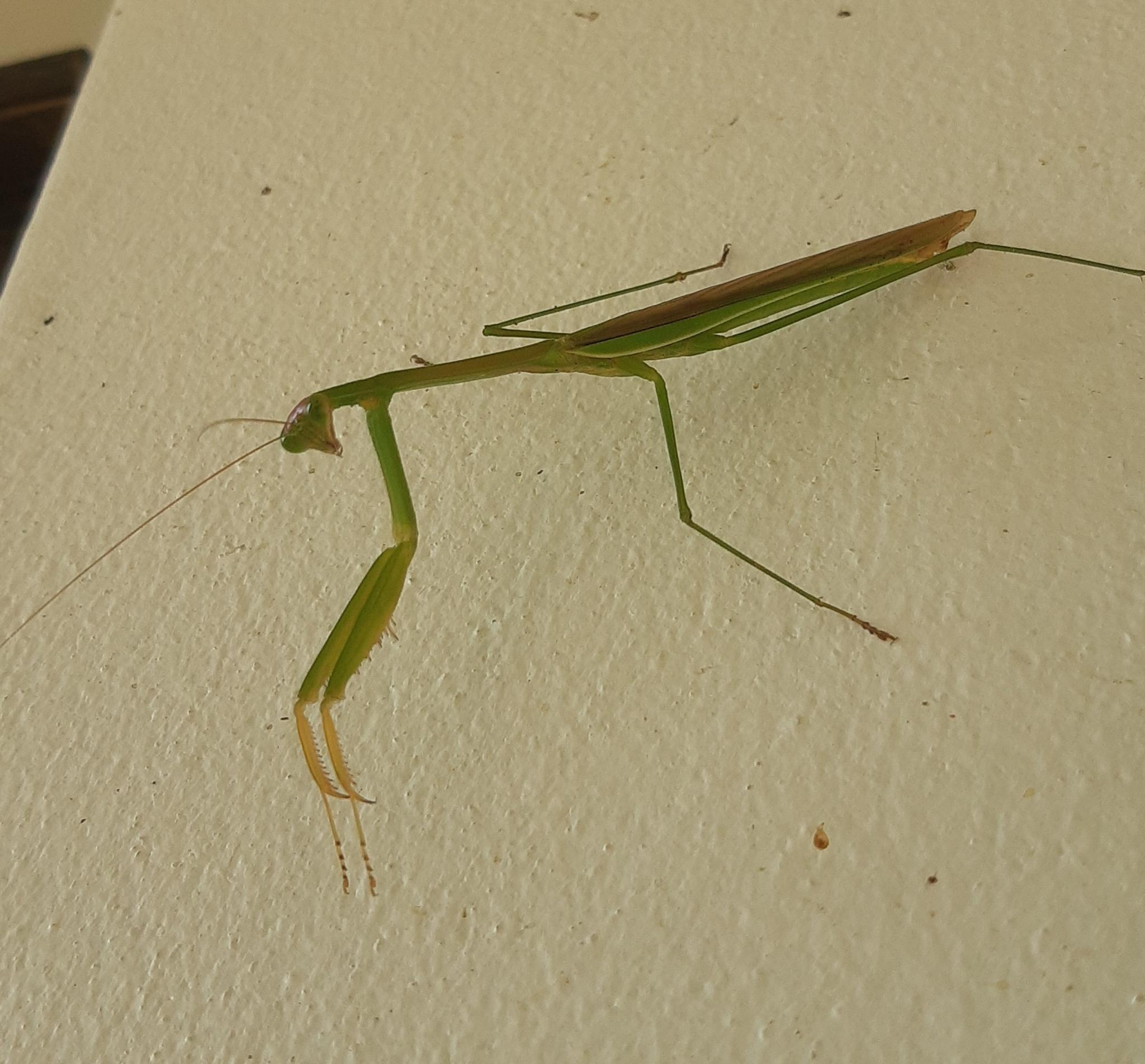 What's in your garden?-mantis2-jpg