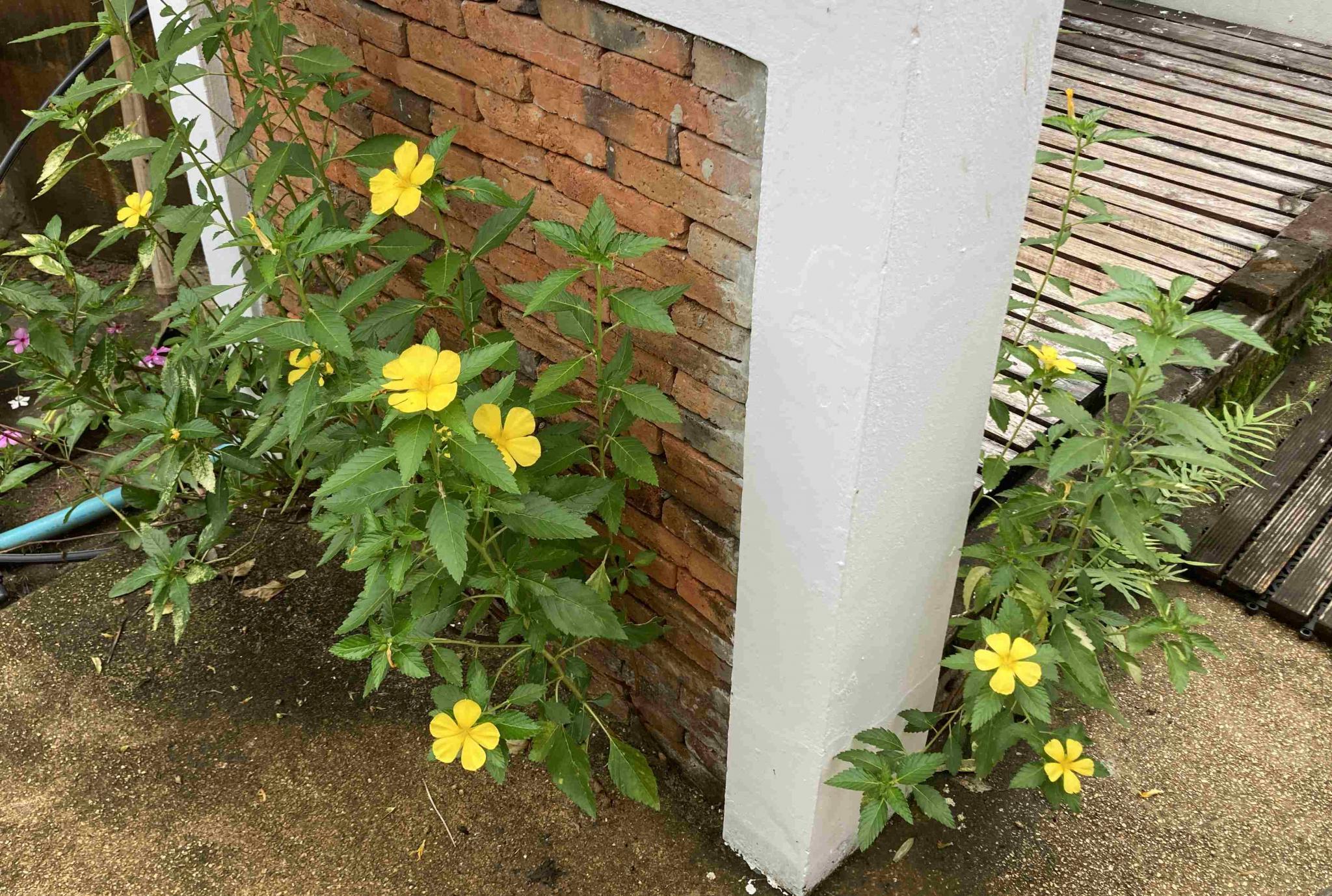 What's in your garden?-img_2277-jpg