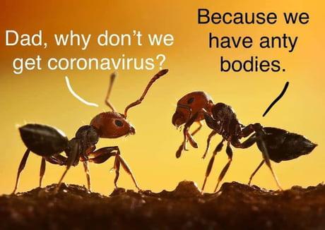Coronavirus jokes-alw2nnm_460s-jpg