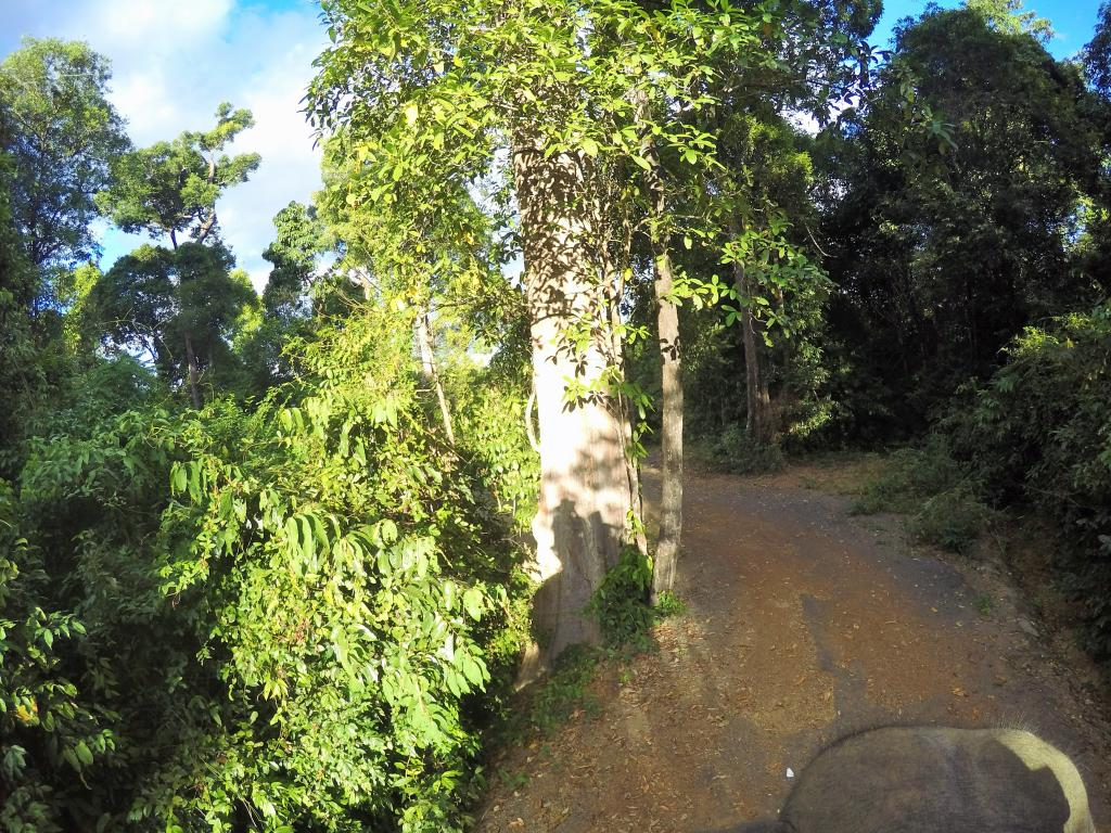 Bungling in the Jungle, Laos, 2018.-gopr0759-2-jpg