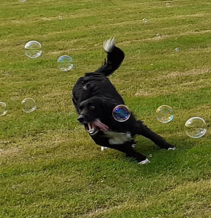 Dogs-20200617_173705-jpg