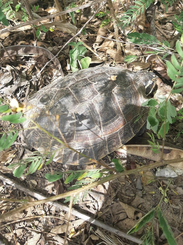 Wildlife through my/ your lense...-tortoise22-jpg