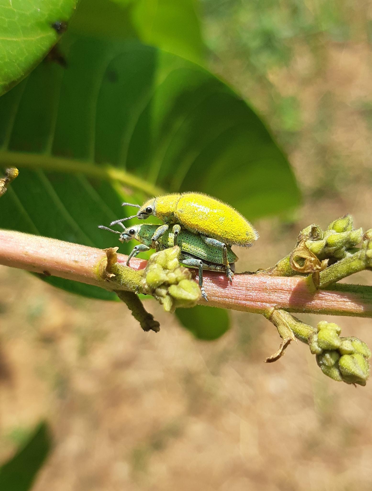 Wildlife through my/ your lense...-beetles2-jpg