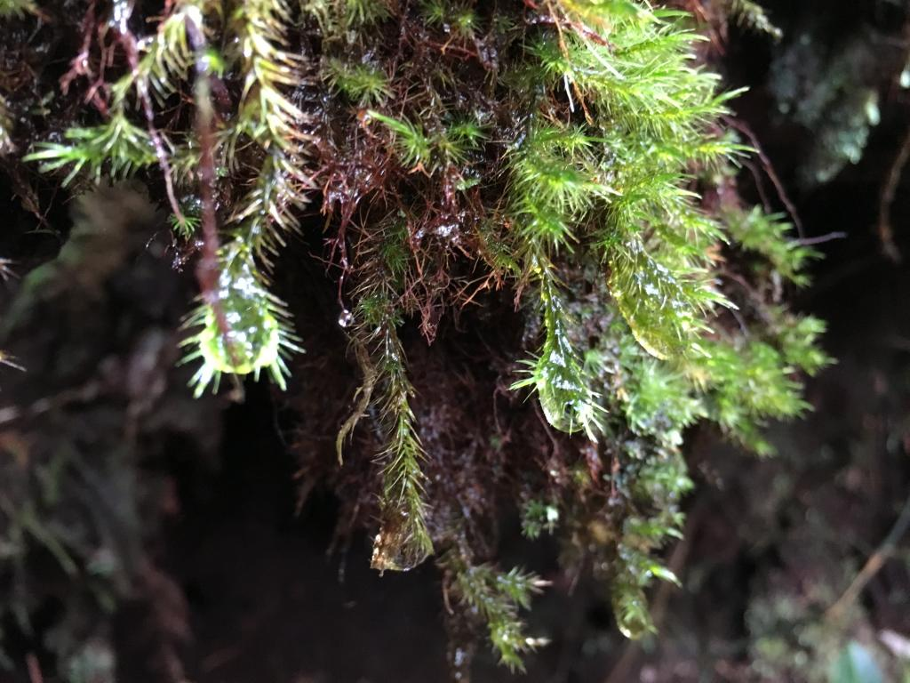 Cameron Highlands -  anyone been?-img_4229a-jpg