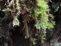 Cameron Highlands -  anyone been?-img_4229a.jpg