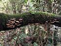 Cameron Highlands -  anyone been?-img_4238a.jpg