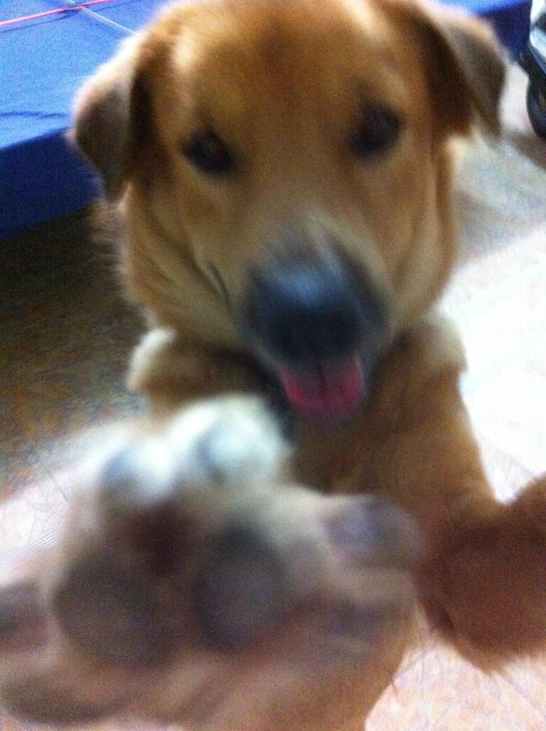 Anna the dog-10848542_212219692281584_7590068902846543680_o-jpg