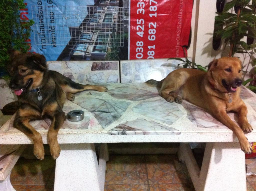 Anna the dog-1932794_212219942281559_4842574606359108129_o-jpg