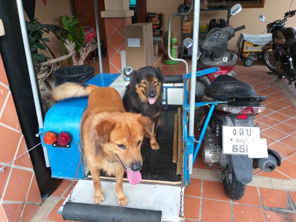 Anna the dog-20190401_072108-jpg