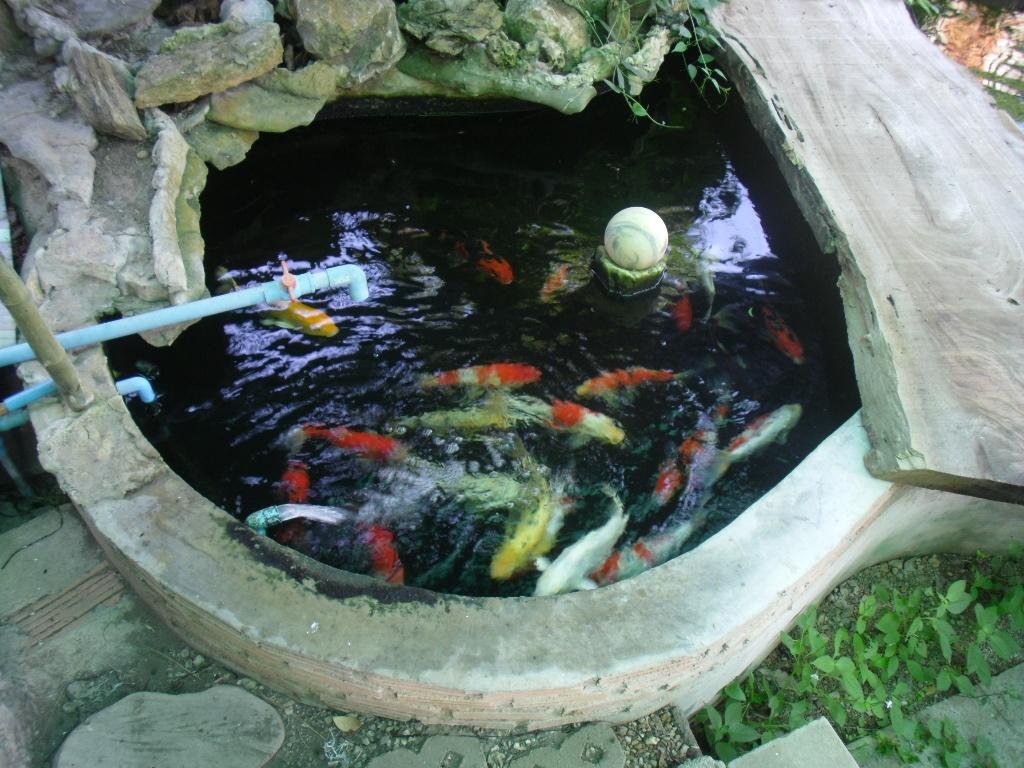 An Isaan Pond-18111864a-jpg