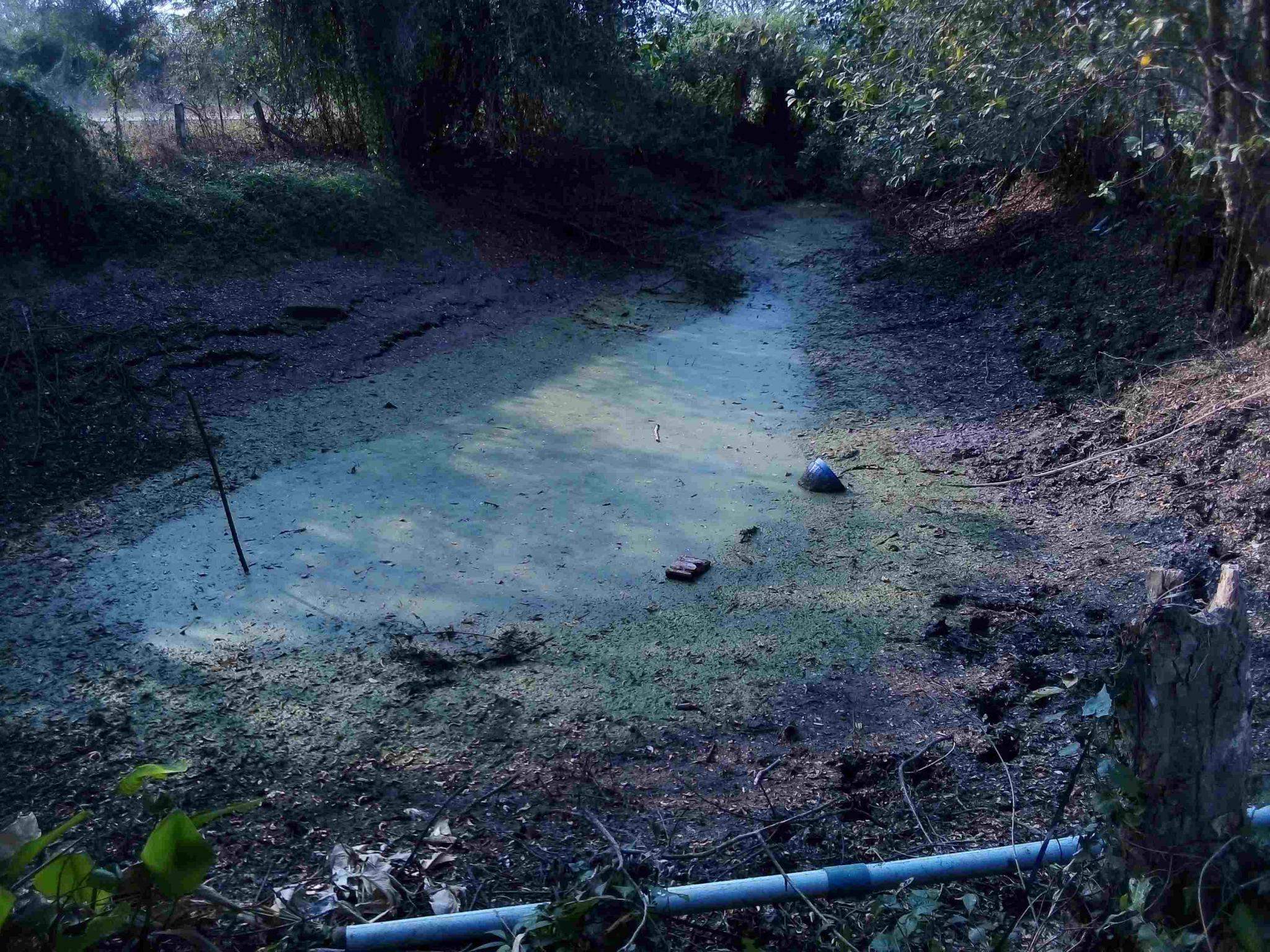 An Isaan Pond-img_20200225_162708-jpg