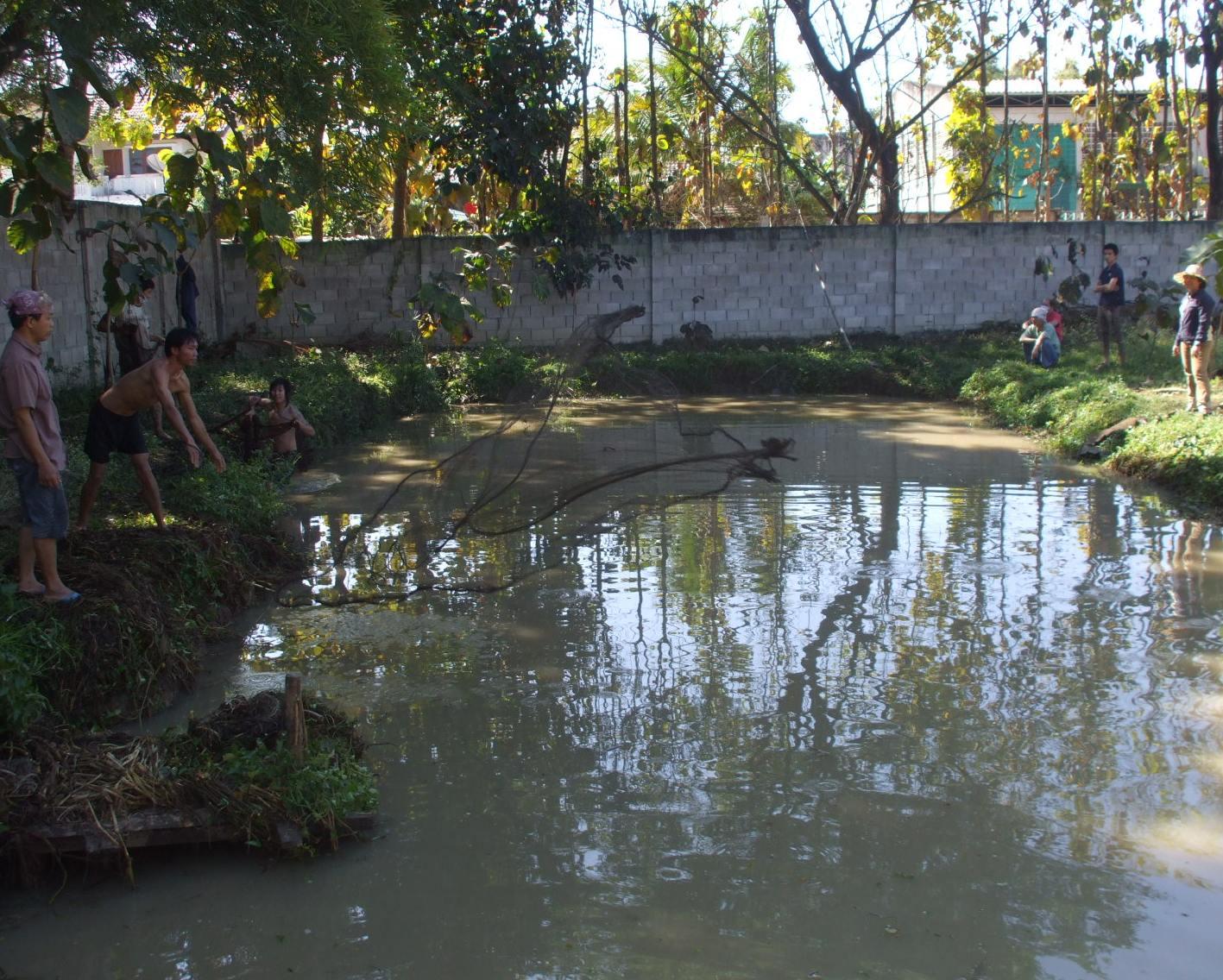 An Isaan Pond-091229-011a-jpg