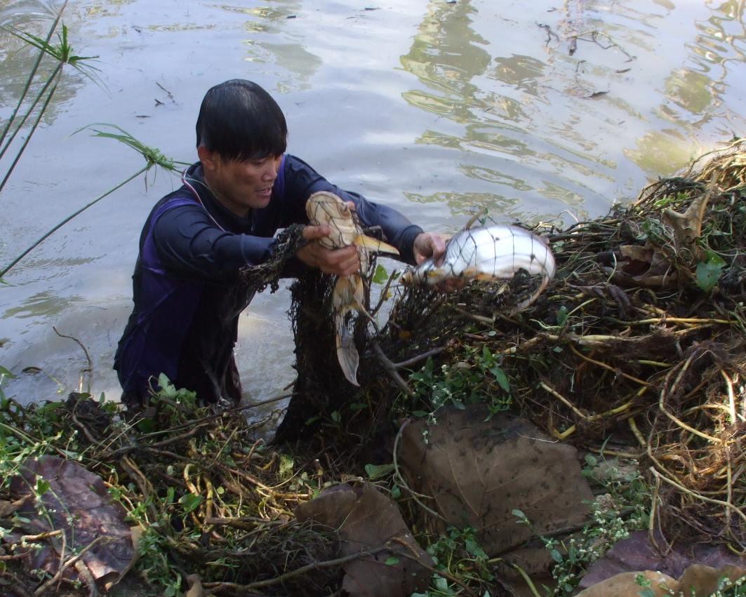 An Isaan Pond-091229-005a-jpg