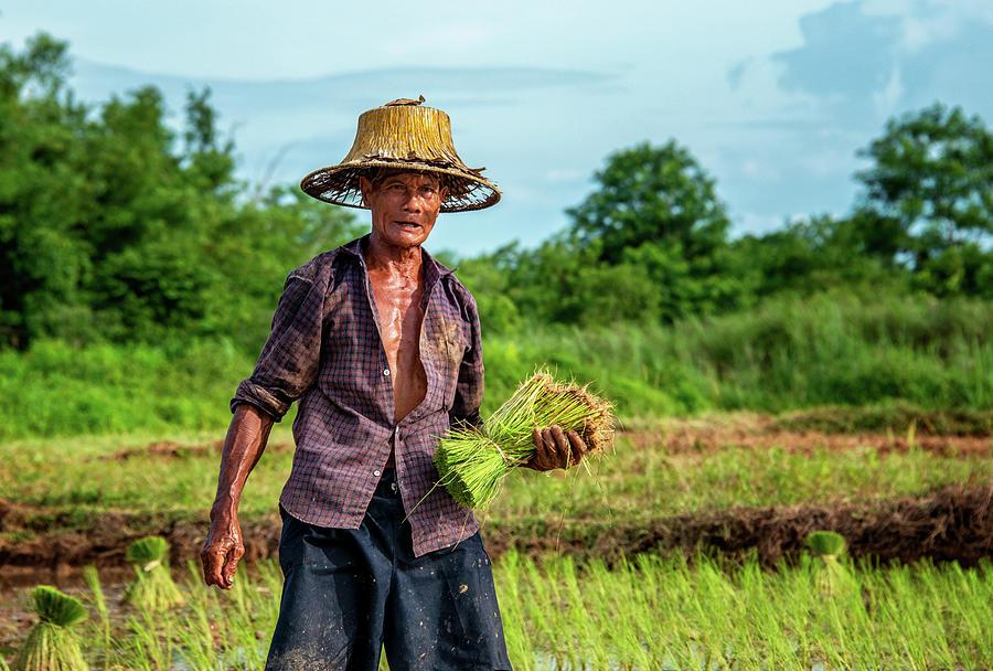 An Isaan Pond-thai-farmer-lee-craker-jpg