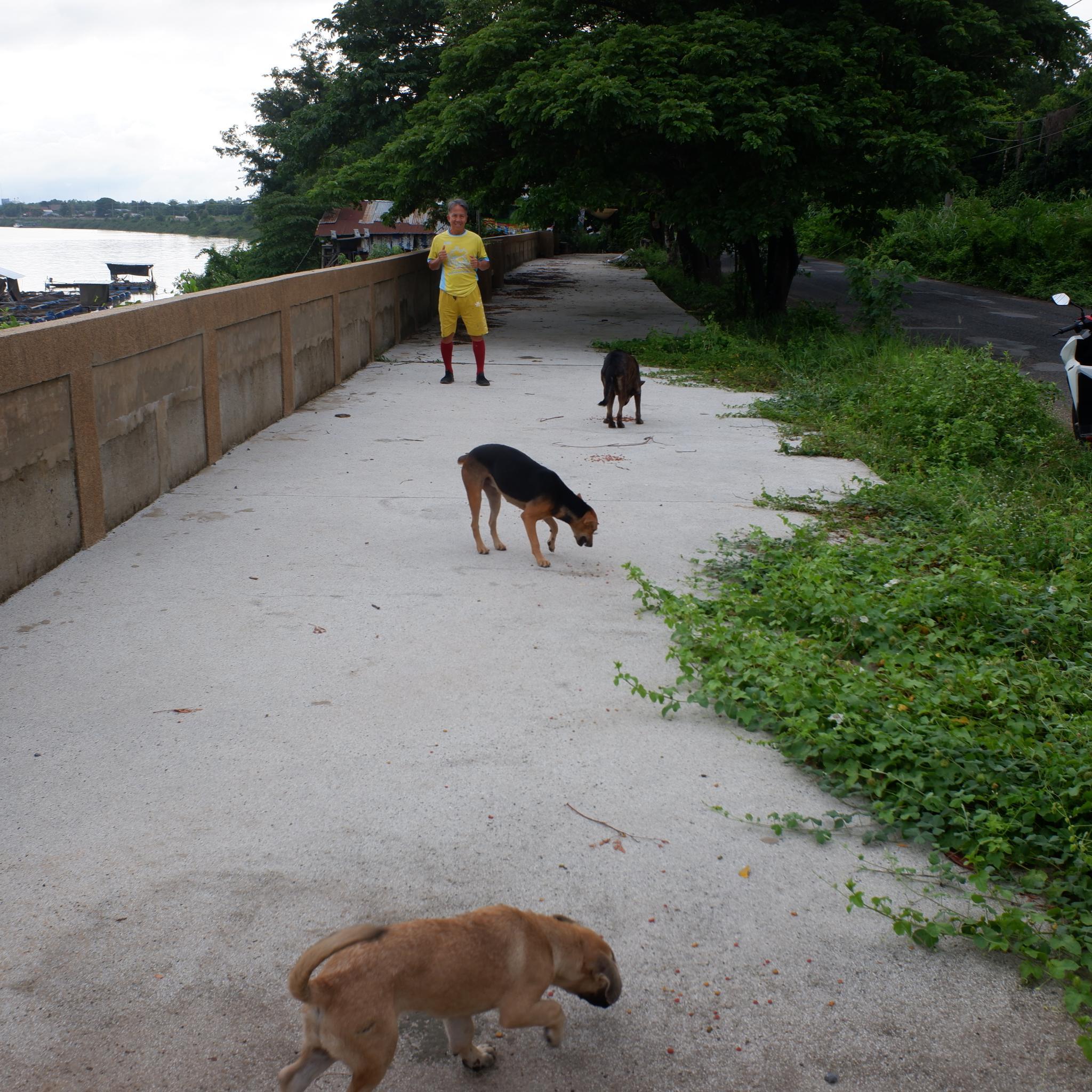Anna the dog-dscf0815-jpg