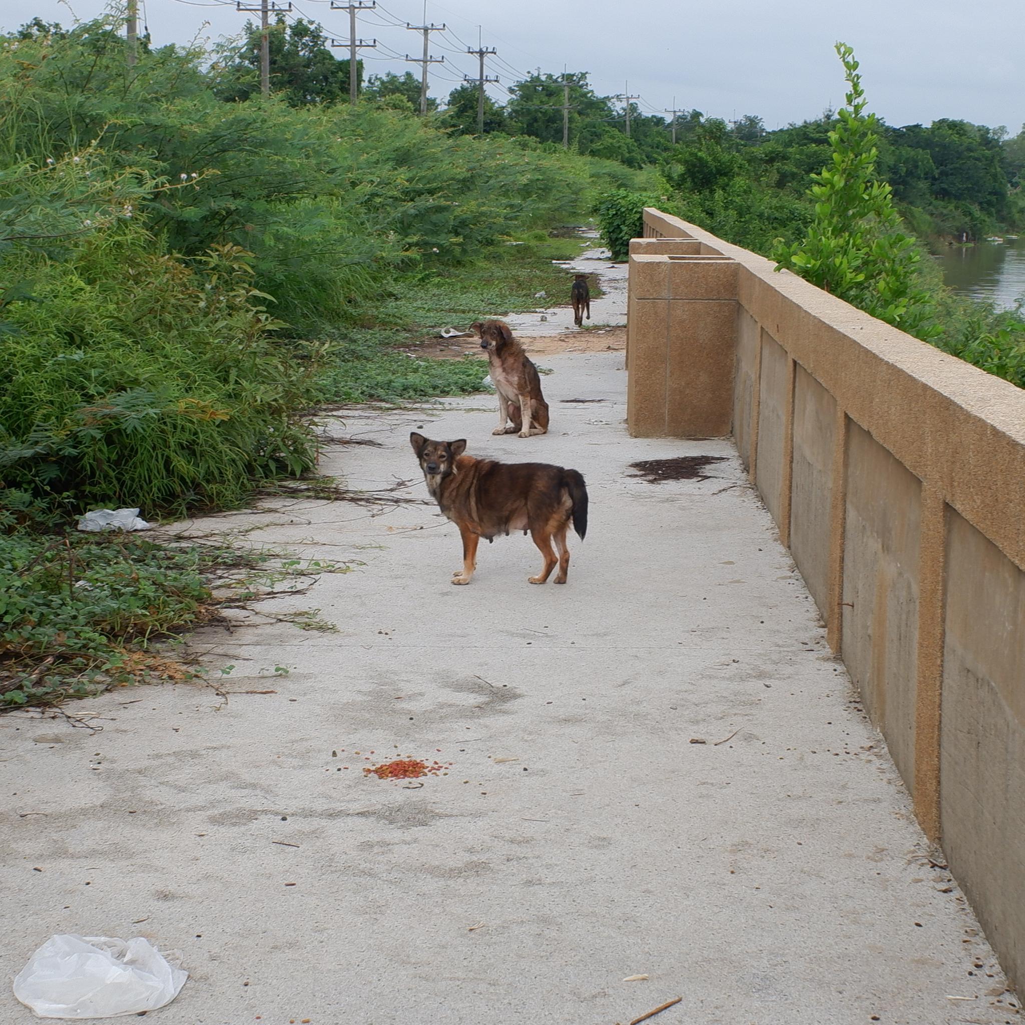 Anna the dog-dscf0818-jpg