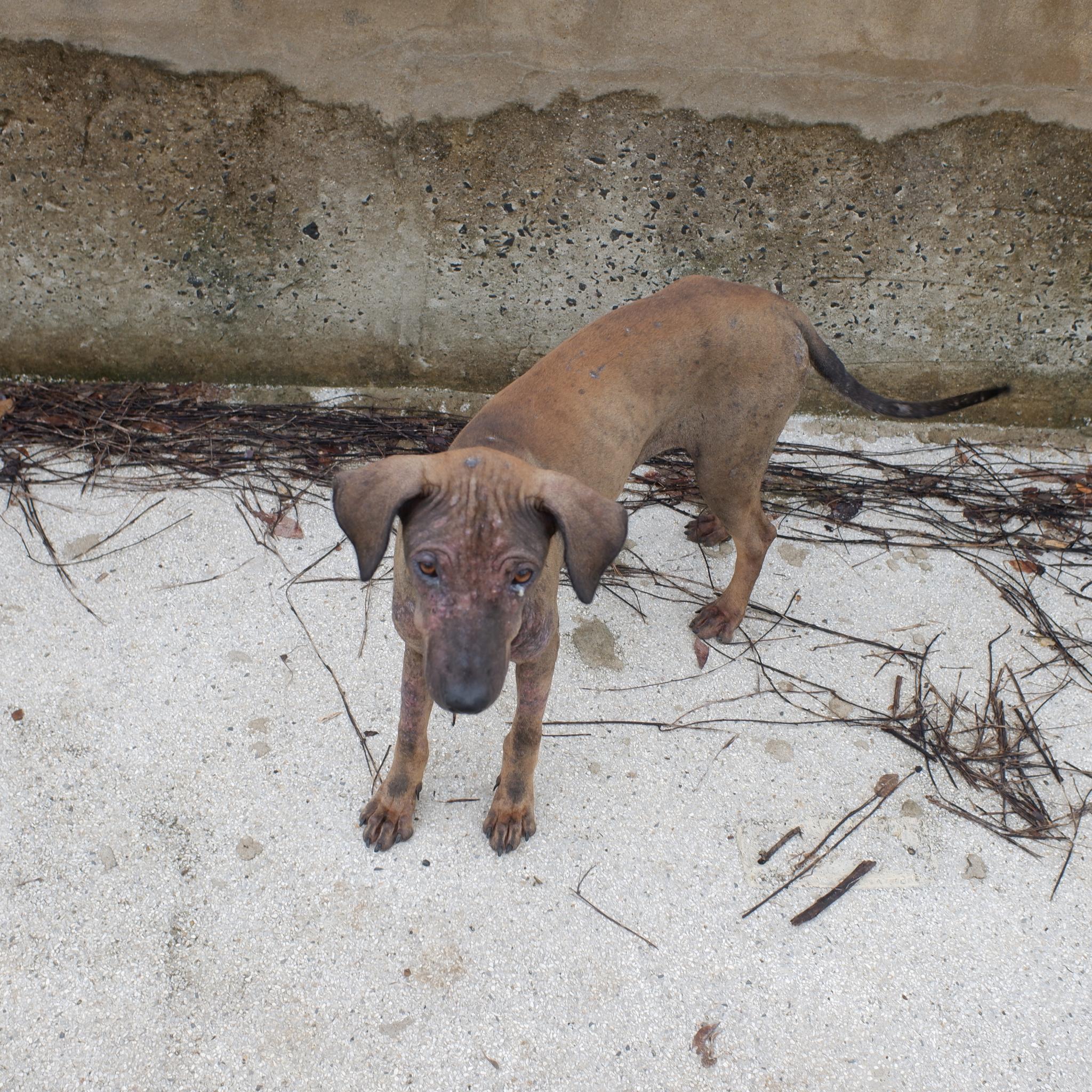 Anna the dog-dscf0827-jpg