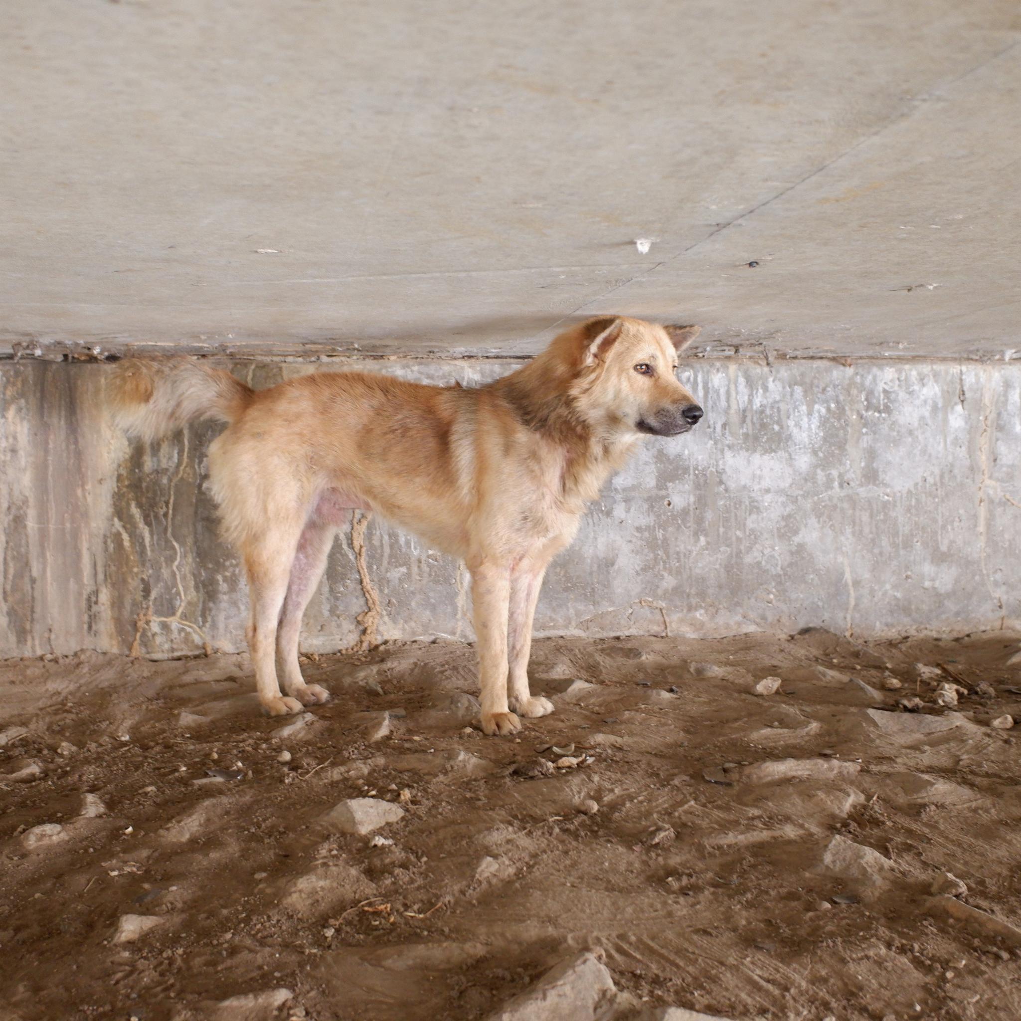 Anna the dog-dscf0732-jpg