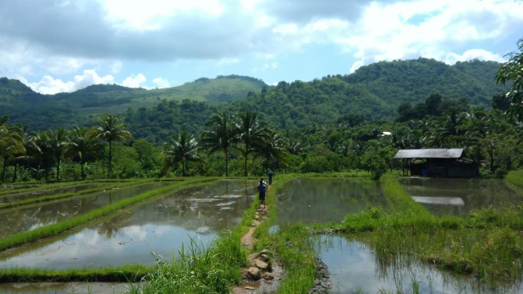 Hiking in the Phils-p_20181007_103214_ricefield-jpg