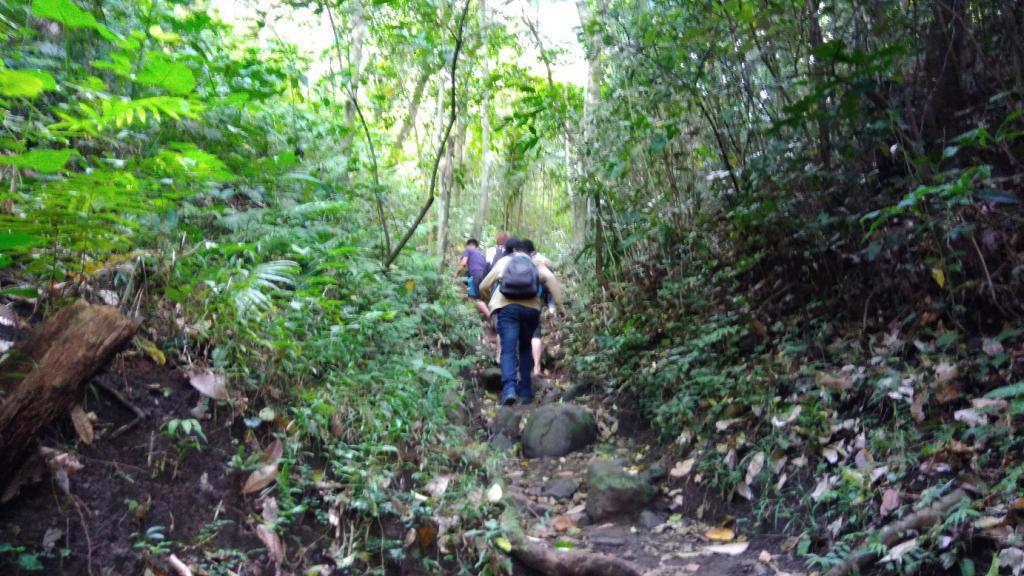 Hiking in the Phils-06_upward_trail-jpg