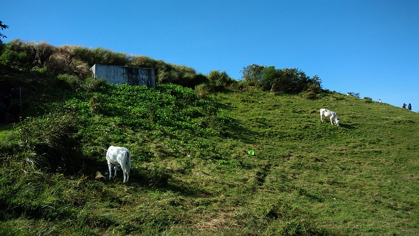 Hiking in the Phils-p_20180216_085936_cows-jpg