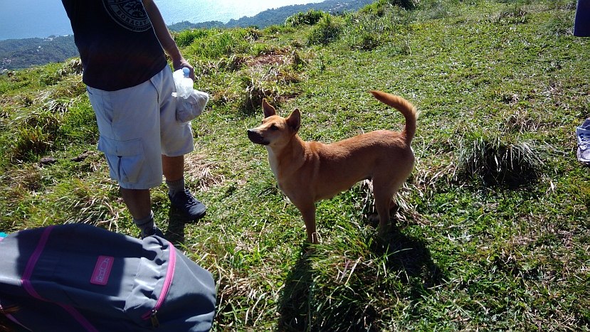 Hiking in the Phils-p_20180216_094725_dog-jpg