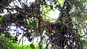 Hiking in the Phils-38_fruits-jpg