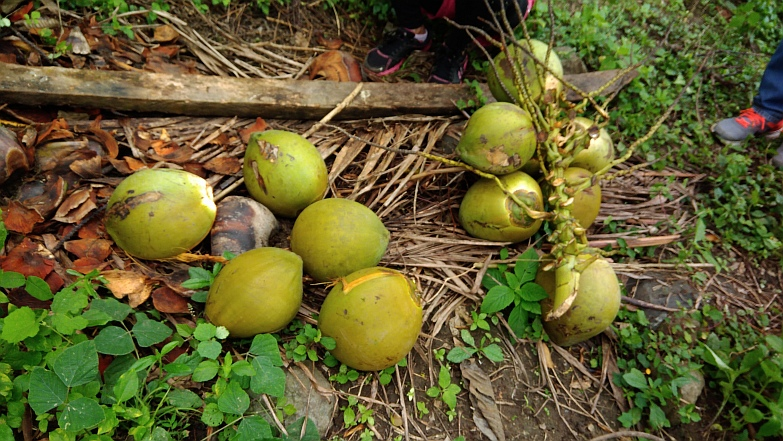 Hiking in the Phils-41_coconuts-jpg