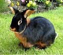 Traitors and Dogs-cb9b2e7f6902344f82865cc750b71fbf-cutest-animals-baby-animals-jpg
