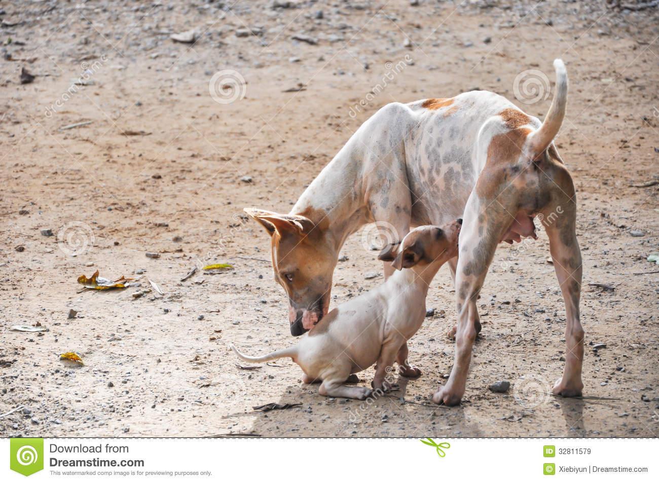 Eurasia Topics-stray-dog-puppy-sucking-milk-mother