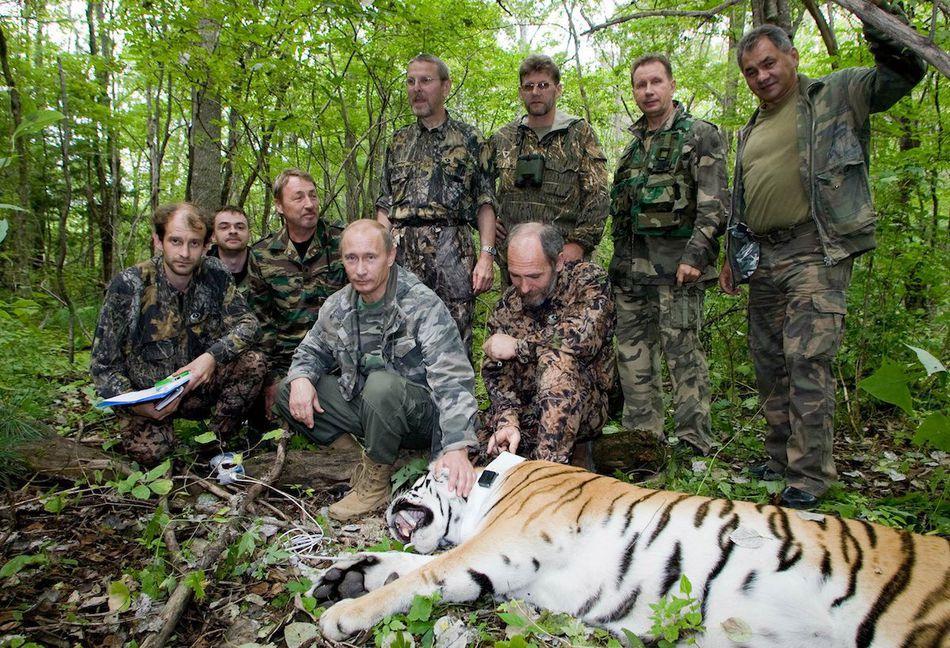 How dangerous is Vladimir Putin?-putin-tiger-jpg