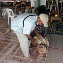 Man seriously injured after his pitbull attacks him in the Pattaya area-622bb157-f6f8-41cb-b560-6cf5a53d58d3-jpeg