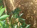 What snake?-img_20200824_153821-jpg