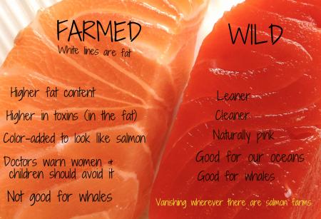 Dinner-farmed-vs-wild-pic-450x307-png