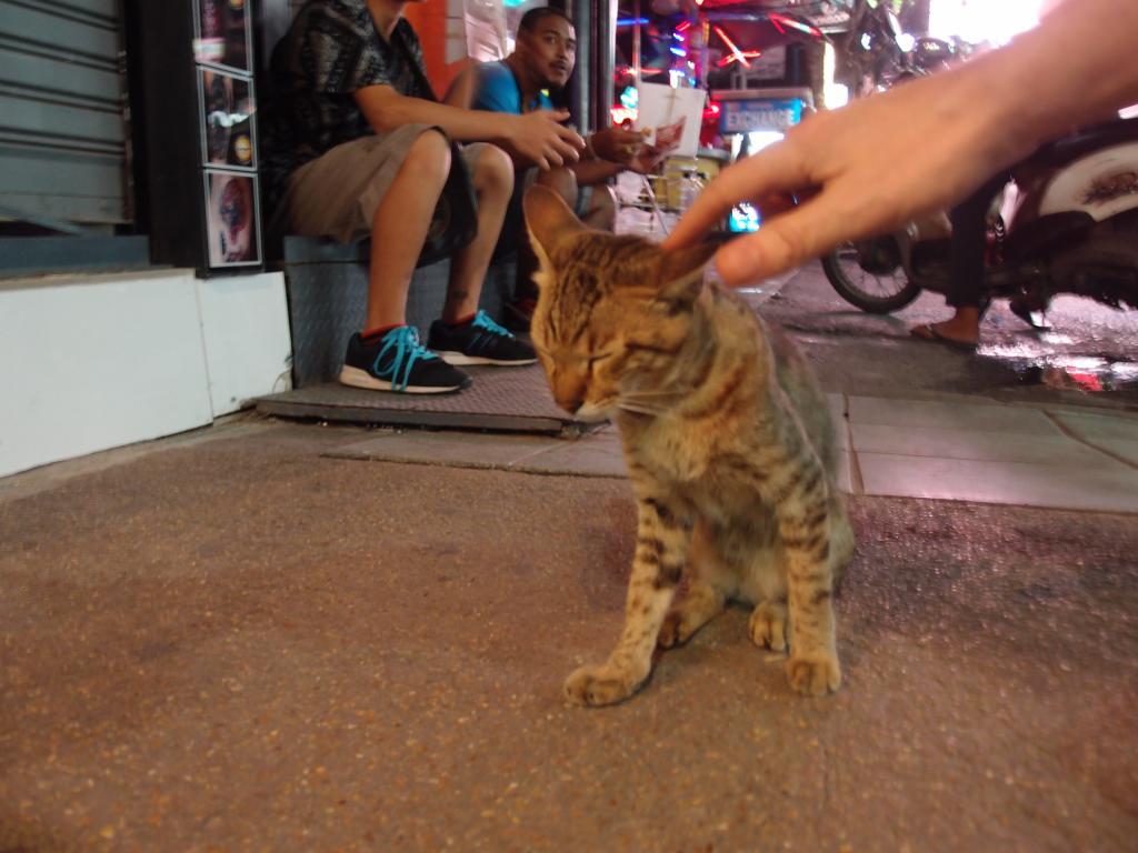 The Teakdoor Cat Thread-p7050704-jpg