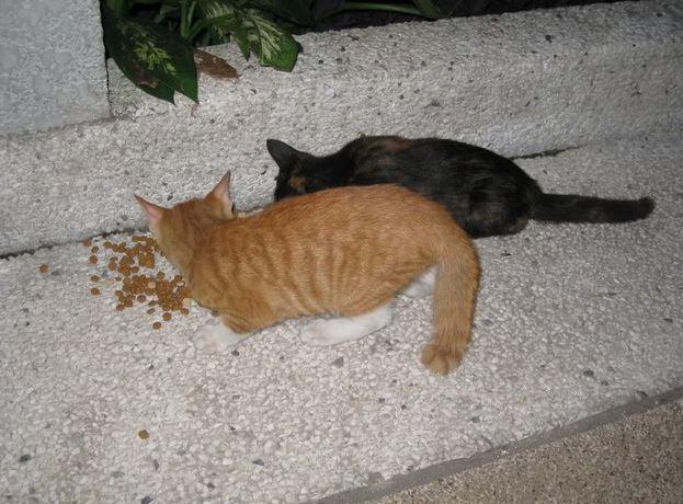 The Teakdoor Cat Thread-2017-06-11-23_45_39-teakdoorpics4thaug058-jpg
