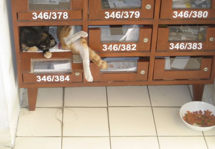 The Teakdoor Cat Thread-2017-06-11-23_48_31-aug30th006-jpg