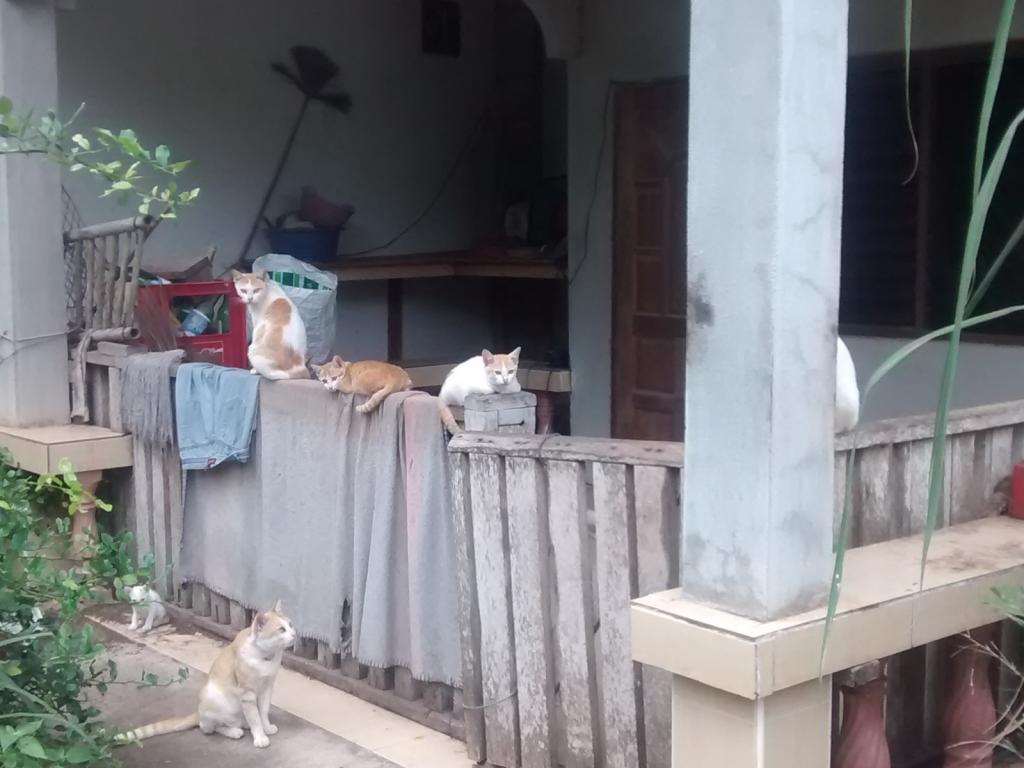 The Teakdoor Cat Thread-cat1-jpg