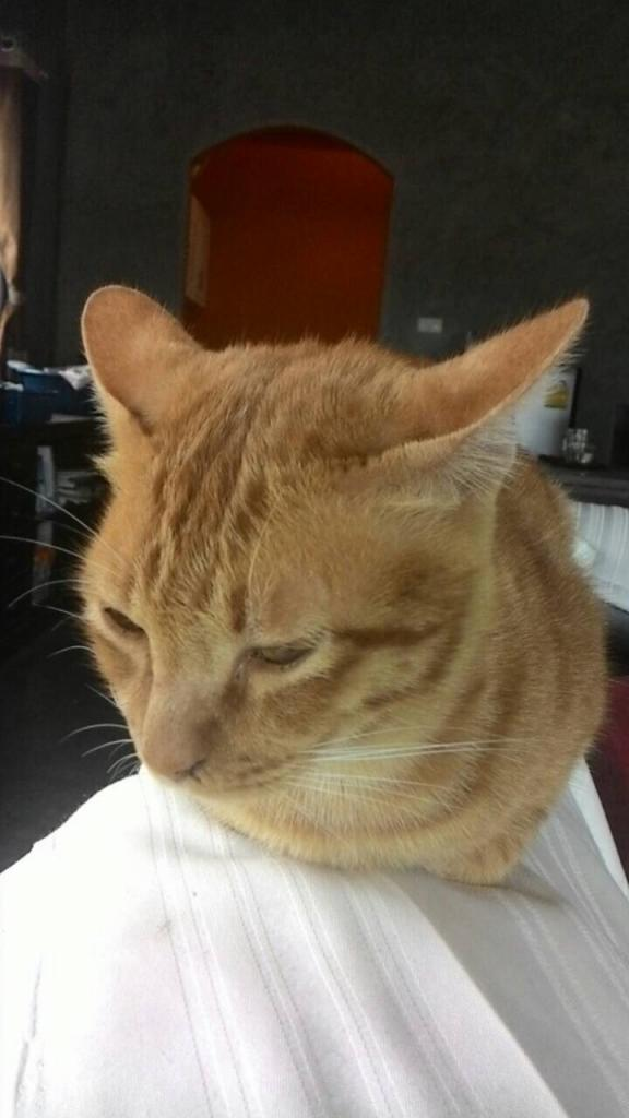 The Teakdoor Cat Thread-img_0054-jpg