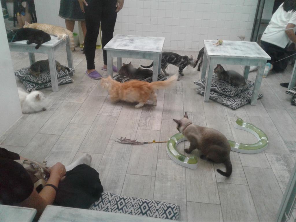 The Teakdoor Cat Thread-20170430_132250-jpg