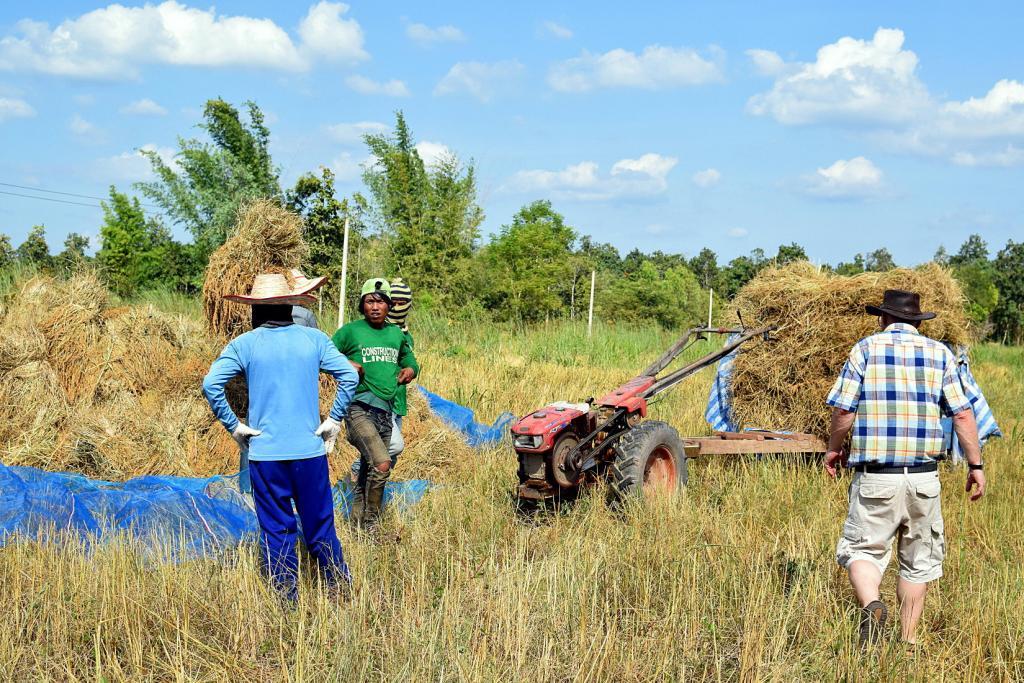 Post any pic anytime as many as u like-rice_farm_2512-jpg