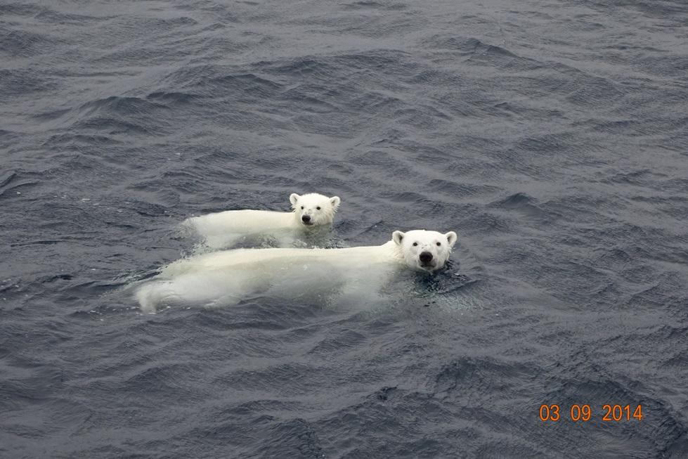 Random offshore pics-ma-cub-jpg