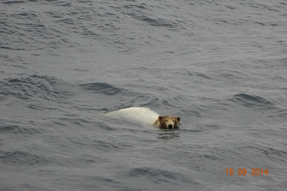 Random offshore pics-swimming-jpg